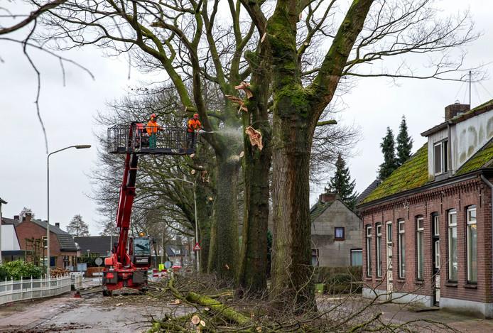 Bomenkap in de Zeilbergsestraat in Deurne in 2015. Foto ter illustratie.