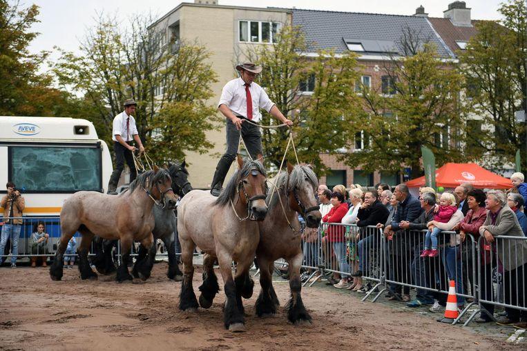 Er werd ook een spectaculaire show met Brabantse trekpaarden geserveerd.