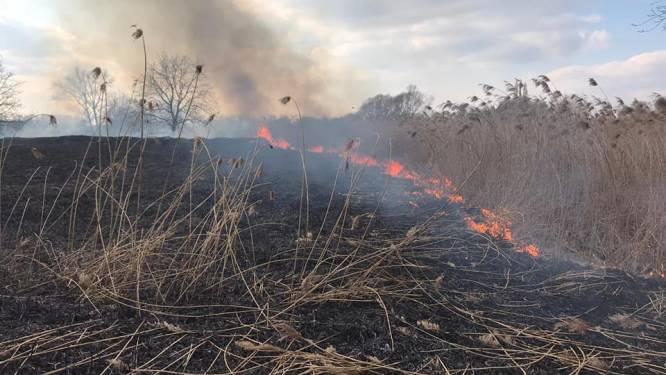 Riet vat vuur aan Zavelputten: brandweer kan snel blussen