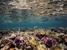 Environ 14% du corail a disparu dans le monde entre 2009 et 2018