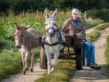 Ruud en Mechelien onthaasten met ezel Plato, de intelligente oen: 'Mensen kijken vreemd als ze ons zien'