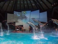 Gaat Dolfinarium in Harderwijk kopje onder door 'rendementsobsessie' van zijn Spaanse eigenaar?