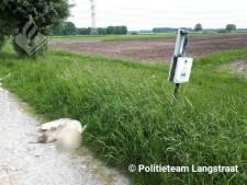 Faunabescherming Oosterhout geschrokken door doodgebeten zwaan en looft beloning uit voor gouden tip