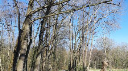 Wichelen sluit aan bij Erfgoeddienst en lanceert historische wandeling