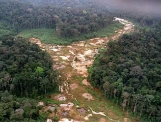 Iedere zes seconden verdwijnt een voetbalveld tropisch oerbos