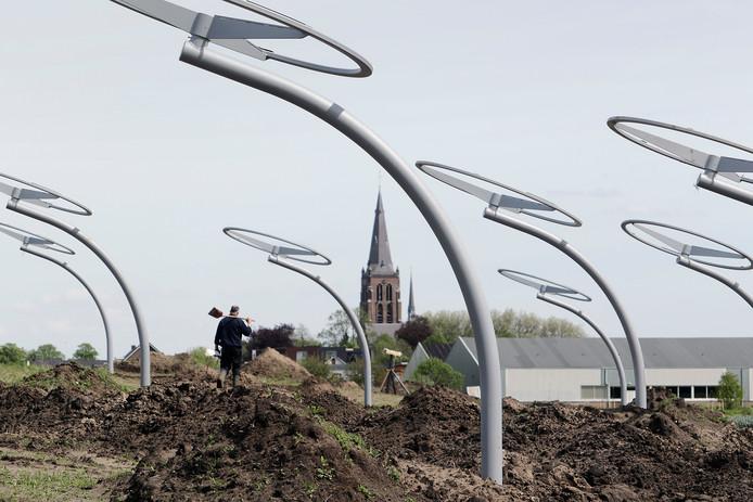 Oss beschikt sinds 2016 ook over zonnebloemen langs de Weg van de Toekomst.