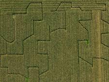 Jonge boeren in Dronten mogen niet meedoen aan project Nieuwe Natuur en eisen 1,4 miljoen euro van gemeente