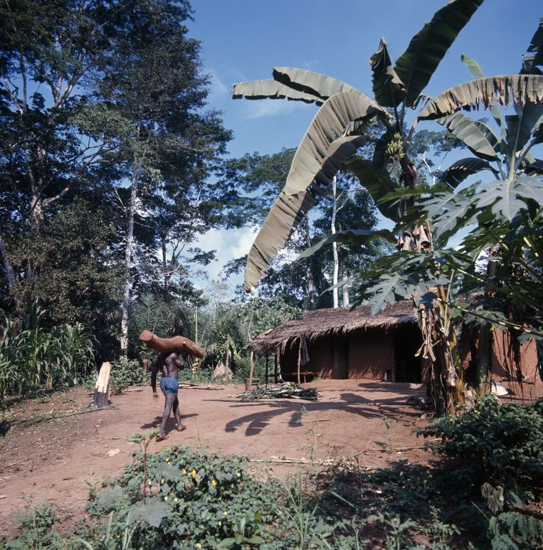 Een dorp in Kameroen. Beeld Gamma-Rapho via Getty Images