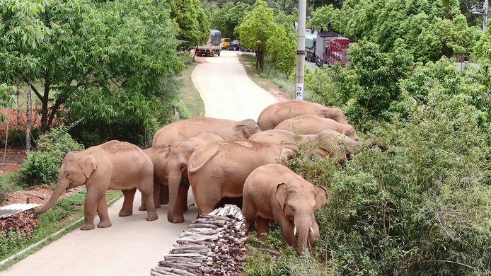 De schade door de olifanten wordt voorlopig geschat op 1,1 miljoen dollar (zo'n 900.000 euro).