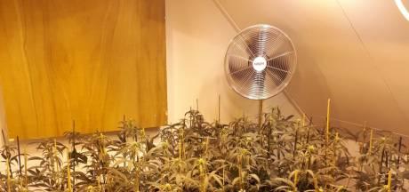 Hennepkwekerij met 600 planten gevonden in Wamel, bewoner opgepakt