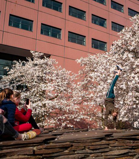 Straatbeeld: Lang leve de lente in het Tivolipark