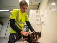 Dierenambulances Groene Hart roepen op: chip je kat