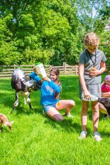 Kinderen mogen weer de wei in: Eindelijk naar de geiten, kippen en konijnen