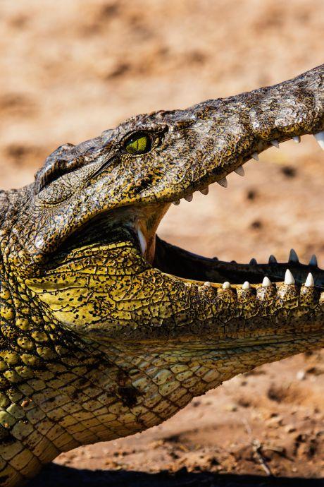 Un garçon de huit ans avalé par un crocodile en Indonésie