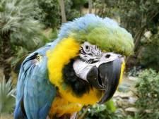 Vrijwilligers papegaaienpark Veldhoven zijn witheet