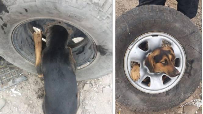 Puppy raakt vast in gedumpt autowiel maar wordt gered door brandweer