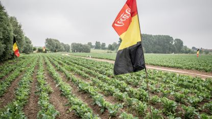 Boer al helemaal in WK-modus: Belgische vlaggen palmen akker in