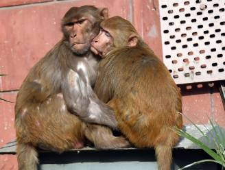Baby dood aangetroffen in put na ontvoering door aap