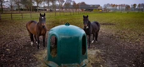Varkenshok wordt paardenpaleis: Valkenswaard krijgt er weer een steenrijke buitenlandse paardenboer bij