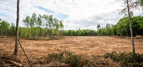 Piepklein kevertje sloopt in korte tijd vier hectare bos in Bilthoven en laat kale vlakte achter