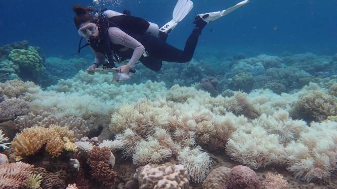Van de Everglades tot het Great Barrier Reef: klimaatverandering verwoest ons natuurlijk erfgoed