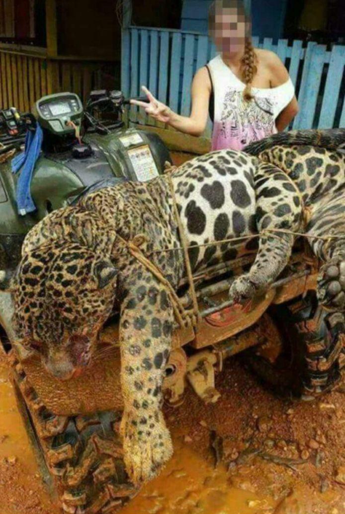 Een vrouw poseert met een dode jaguar.