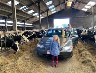 Ritje met de auto door buffel- en koeienstallen? In deze zuivelboerderij kan het