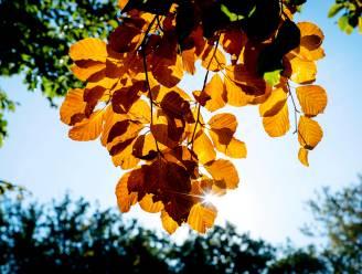 Rustige herfstdag met regelmatig wat zon, rest van de week fris en kans op regen