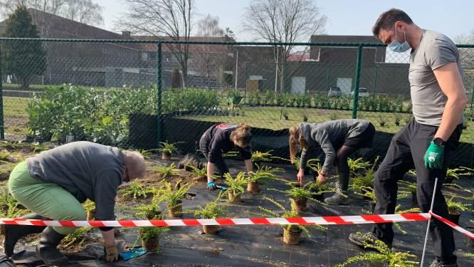 Campus Boomgaard maakt schooldomein groener met 1.100 planten en struiken