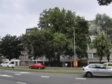 Monumentale plataan die bombardement overleefde, wordt gespaard van kettingzaag