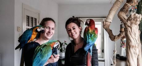 Debbie traint haar papegaaien om vrij te vliegen: 'Bij een hond hak je toch ook de pootjes niet af?'