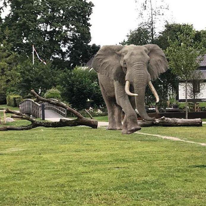 Het ging onder meer om een ivoren tand van een olifant.