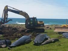 Massale walvissterfte Nieuw-Zeeland mogelijk veroorzaakt door warmere oceaan