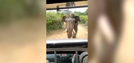 Des touristes imprudents s'approchent trop près d'un éléphant