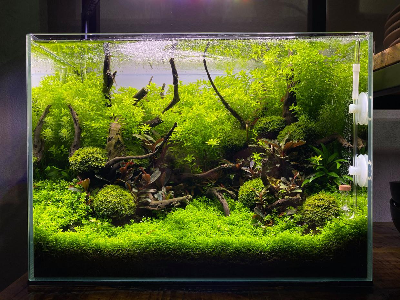 Om een kleine aquascape zo groot mogelijk te laten lijken, breng je veel details aan en werk je met diepte.  Beeld