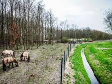Actrice Belinda Meuldijk wil alle konikpaarden weghalen uit Oostvaardersplassen