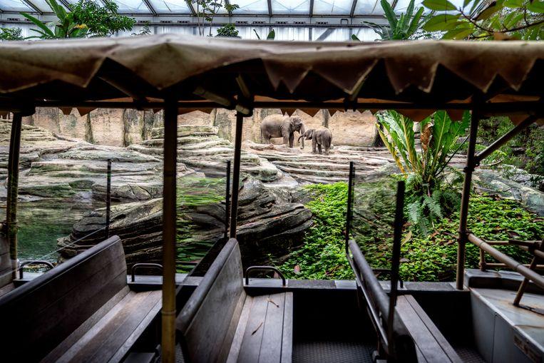 In dierentuin Wildlands Emmen hebben de dieren het rijk alleen: sinds tijden zijn er geen bezoekers in het park. Beeld Reyer Boxem