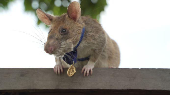 De dappere Magawa showt zijn medaille.
