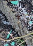 Plastic afval in het groen rond de Fivelingo, in de buurt waar huizen worden geïsoleerd.