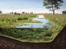 De Lier krijgt bijna een hectare aan nieuwe natuur:  'Vooral een fijne plek voor vissen om te paaien'