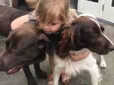 Honden Lola en Pleun ontvoerd uit Netersel, meegenomen door man in wit busje: 'Hij lokte ze en reed weg'