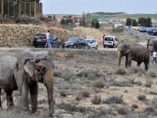 Un éléphant tué dans l'accident d'un camion de cirque