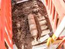 Het tuig is 65 centimeter lang en heeft een doorsnede van 18 centimeter.