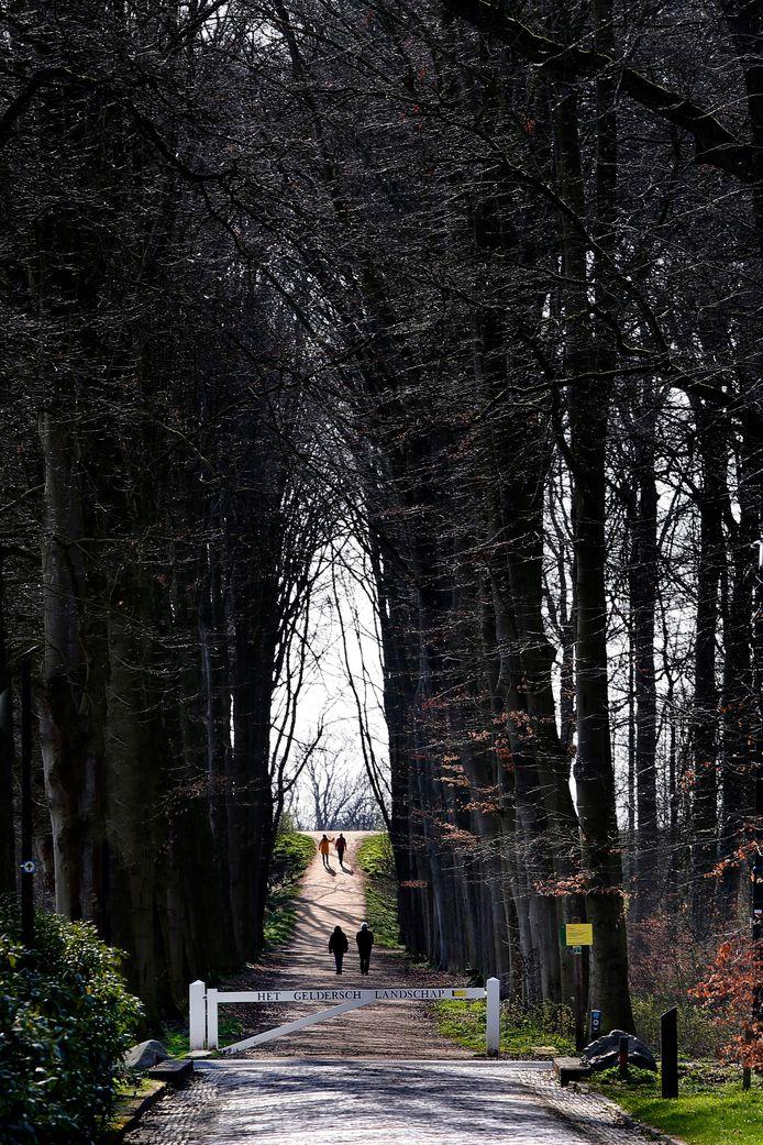 Het Neerijnense bos loopt tot aan de Waaldijk.