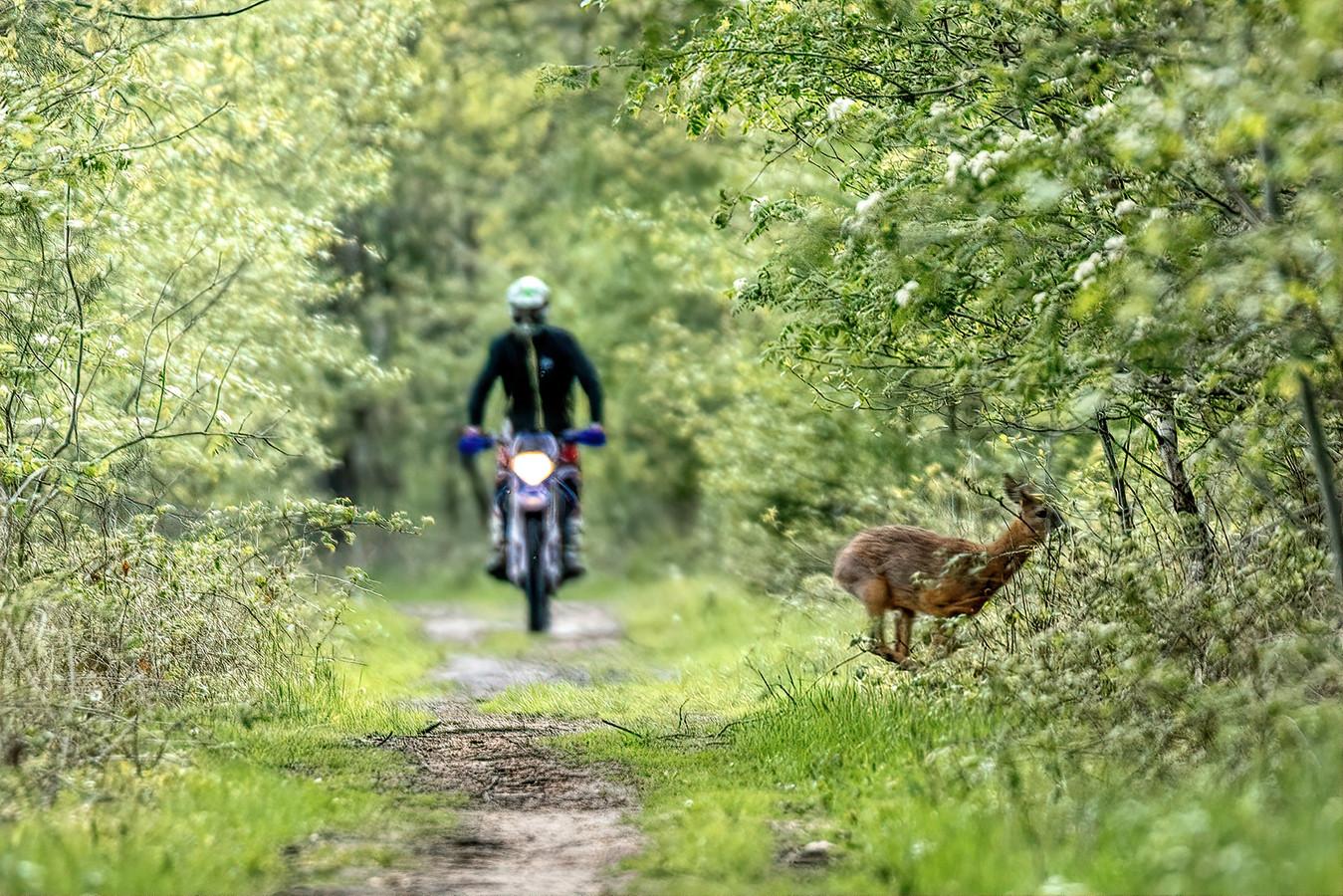 Marcel van de Kerkhof legde het moment waarin de ree wordt opgejaagd door een motorcrosser vast op de foto