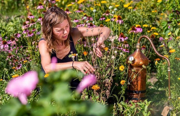 Carolien de Buck is botanische kapper, ze vangt het seizoen in een koperen ketel om botanische wateren te maken voor haar onderneming, waarmee ze ook hoofdhuid behandelt.