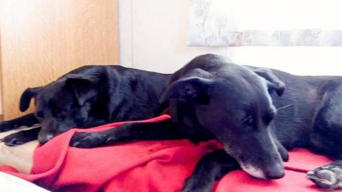 """Dierenbeul vergiftigt twee honden in hun eigen tuin: """"Het waren onze oogappels"""""""