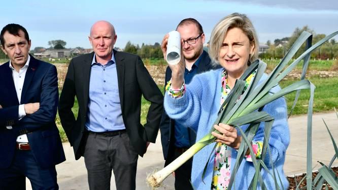 """Inagro demonstreert nieuwe kweekmethode voor prei aan minister Crevits: """"Belangrijke stap naar automatisatie van de oogst"""""""