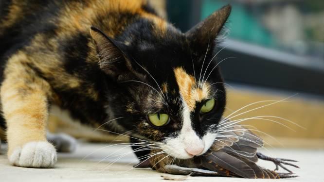 Wetenschappers ontdekken simpele truc om te voorkomen dat je kat op dieren in het wild jaagt