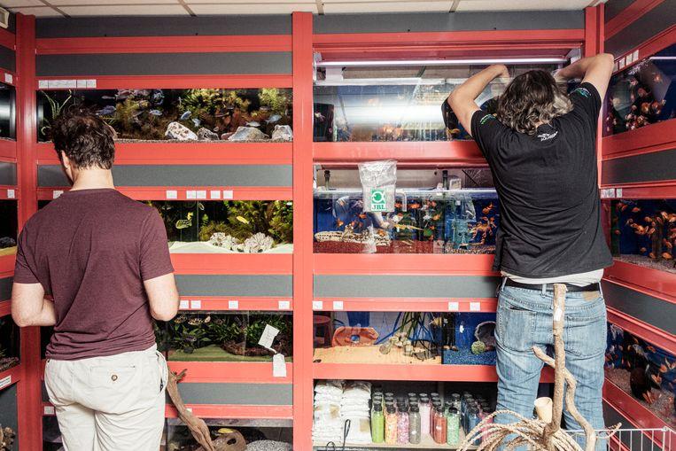 Dierenwinkel Exotica Beeld Jakob Van Vliet